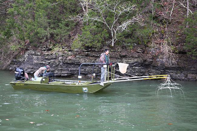 Paintsville lake ky fishing report for Ky lake fishing reports